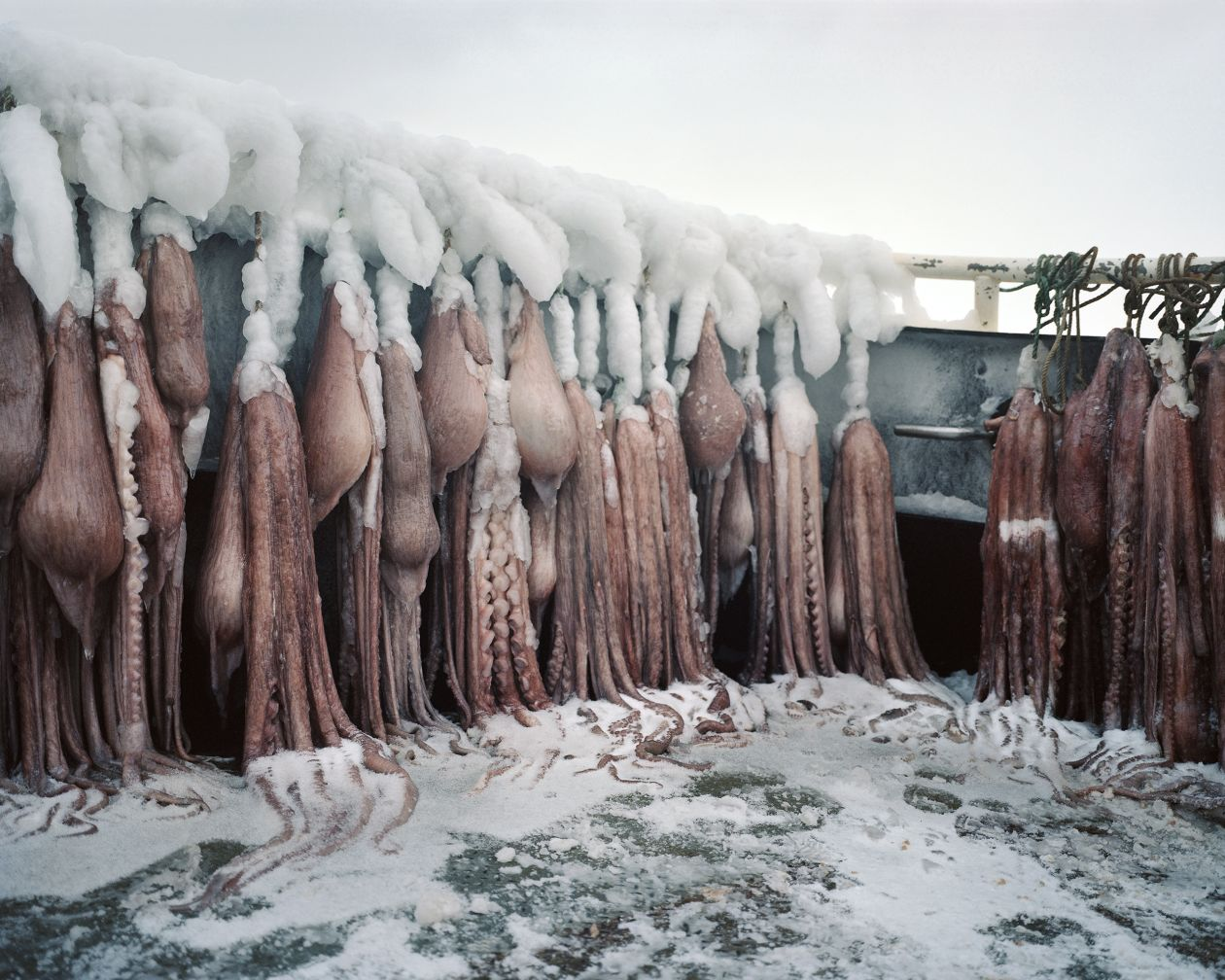 Frozen Octopus (2010) by Corey Arnold