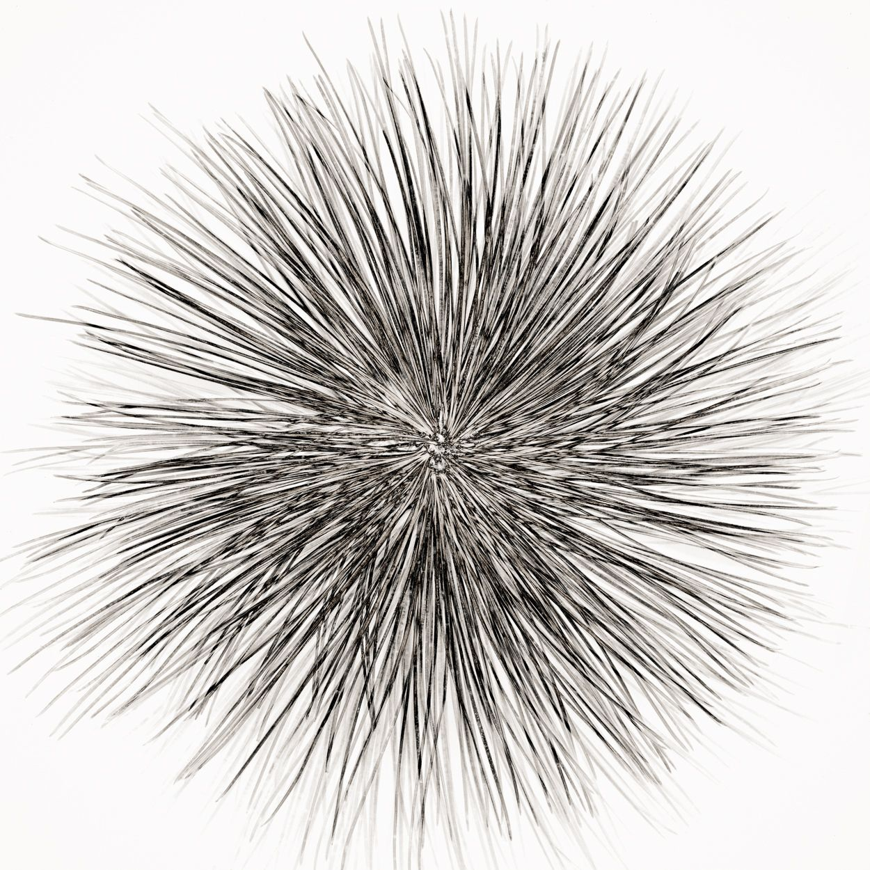 Pine Needles (2009) by Jeffrey Conley