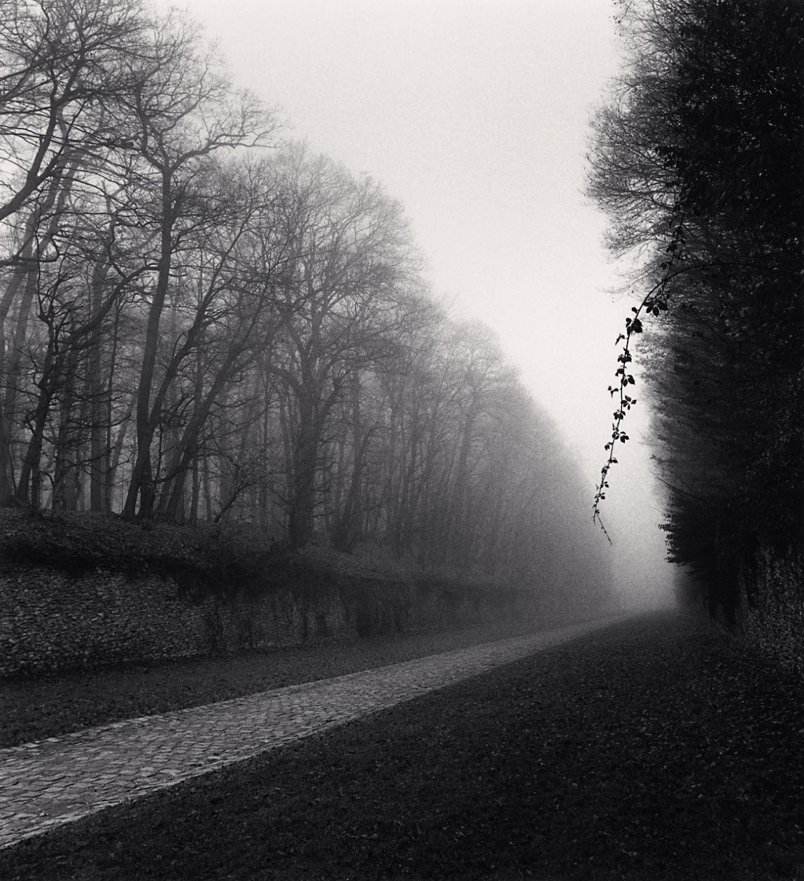 Suspended Vine, Marly (1995) by Michael Kenna