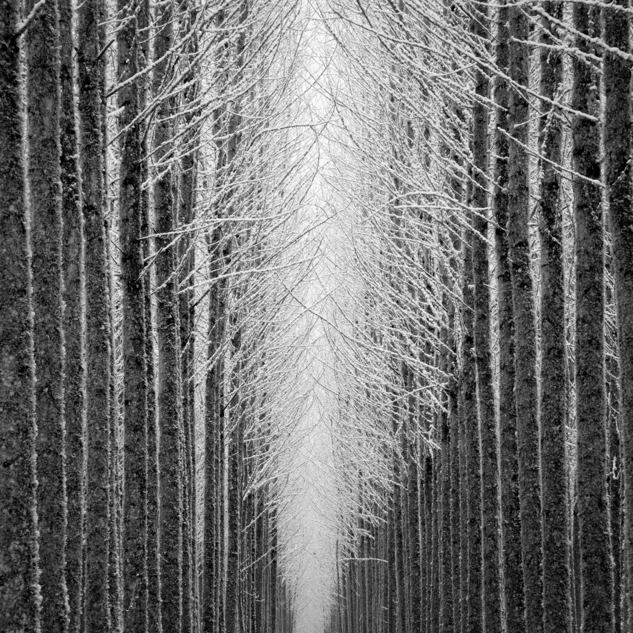 Tree Cathedral (2007) by Jeffrey Conley