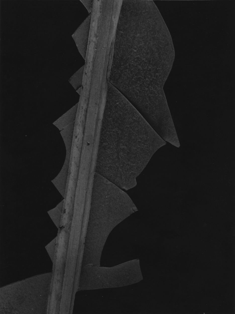 New York 3 (1946) by Aaron Siskind